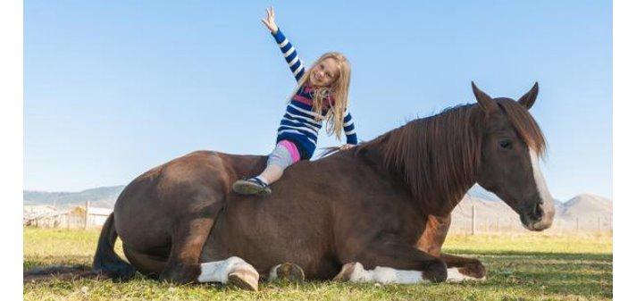 Que dice la ciencia sobre tumbar a los caballos