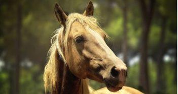 Se conserva la actividad mínima necesaria para el mantenimiento de los caballos