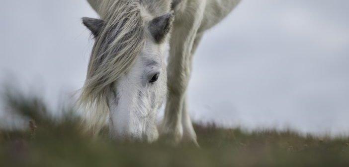 7 consejos para controlar el peso de tu caballo
