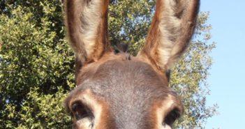 La solidaridad evita el cierre de la reserva de burros Rukimon ante la crisis económica causada por el Coronavirus