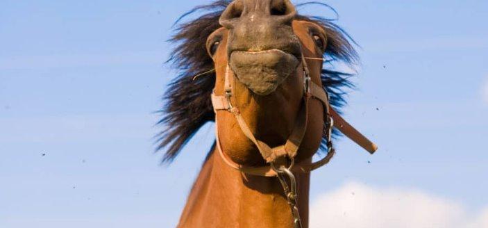 ¿Está tu caballo de humor para aprender?