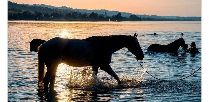 6 consejos para cuidar de la salud de tu caballo este verano