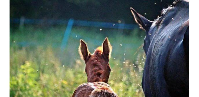 8 consejos para mantener a raya a los insectos y proteger a tu caballo