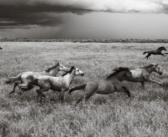 Primer protocolo  para la evaluación del bienestar del caballo salvaje