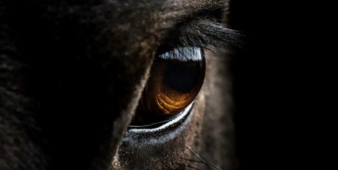 ¿Conoces «el tercer párpado» de los ojos del caballo?