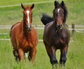 Se establecen protocolos para salvaguardar el bienestar animal