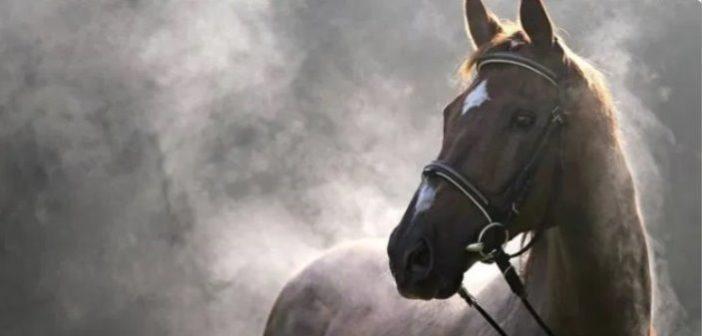 El sudor y la pérdida de electrolitos en los caballos