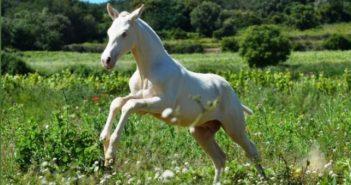 El valor de un caballo también está en su ADN
