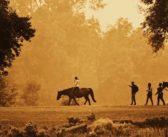 Ya es oficial: los caballos nos aportan bienenstar