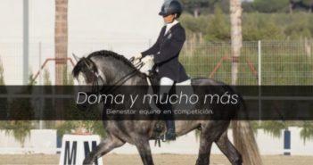 Investigación pionera en Doma Clásica permitirá conocer el estado físico de los caballos de concurso durante la competición