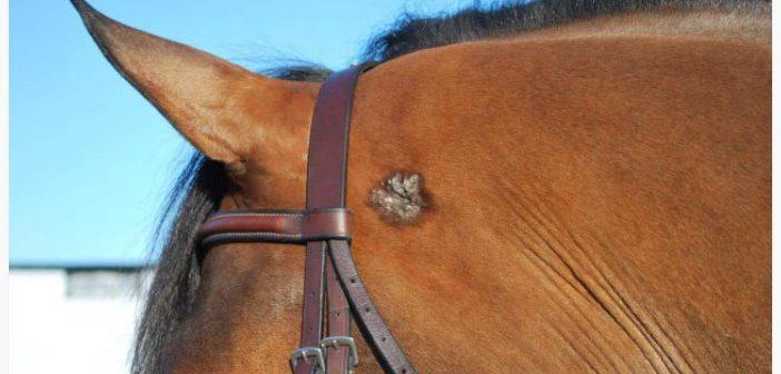 ¿Qué sabemos sobre bultos y protuberancias en los caballos?