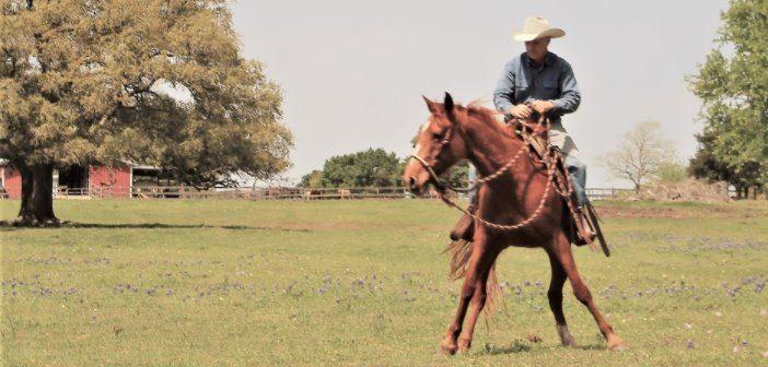 Mi caballo no acepta bien este freno ¿Cambiarlo es la mejor opción?