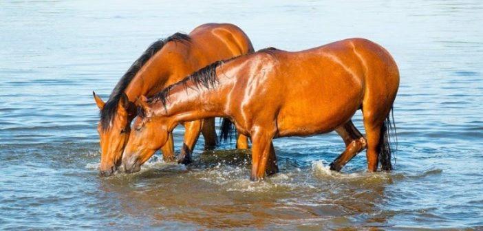 El AGUA en la alimentación del caballo