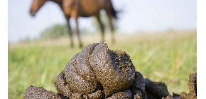 Revisa el estiércol de tu caballo