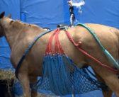 Seguimiento de los caballos afectados de rinoneumonitis
