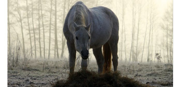 ¿Es seguro alimentar a mis caballos con heno fresco acabado de cosechar?