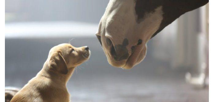 4 consejos para presentar a perros y caballos