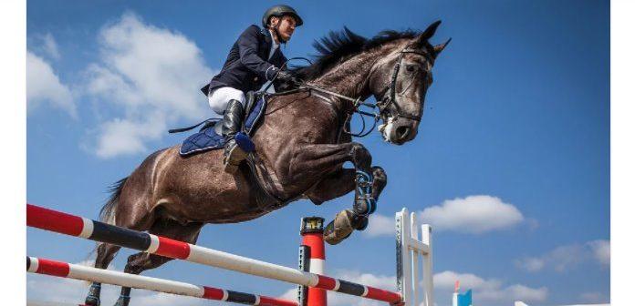 Hoja de ruta para el uso ético de los caballos en el deporte
