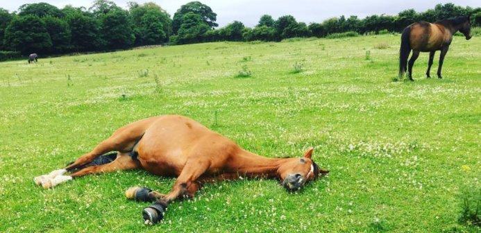 ¿Puede el descanso mejorar el rendimiento de tu caballo?