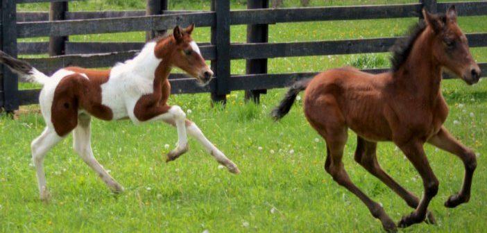 Cría responsable de caballos