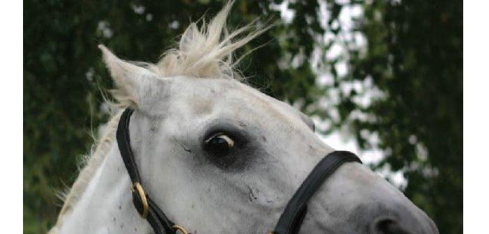 ¿Por qué se asusta mi caballo?