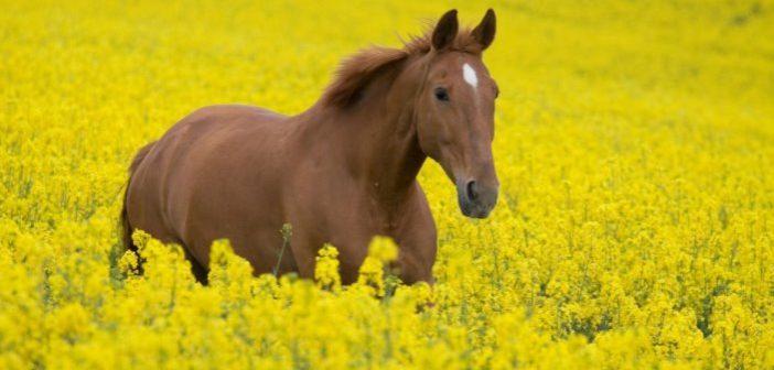 Consejos para cuidar de la salud de tu caballo en verano