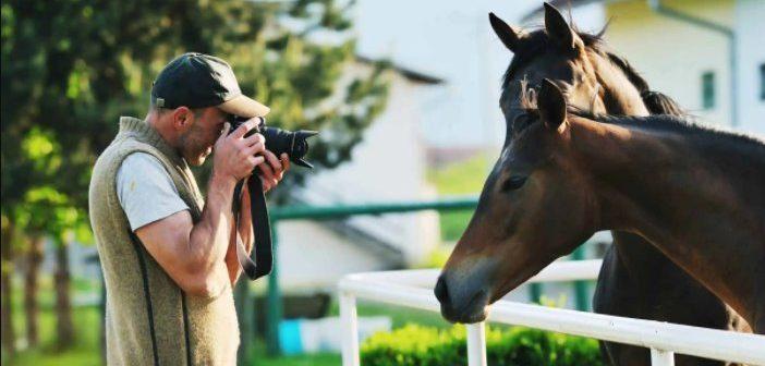 Cómo sacar buenas fotos de tu caballo