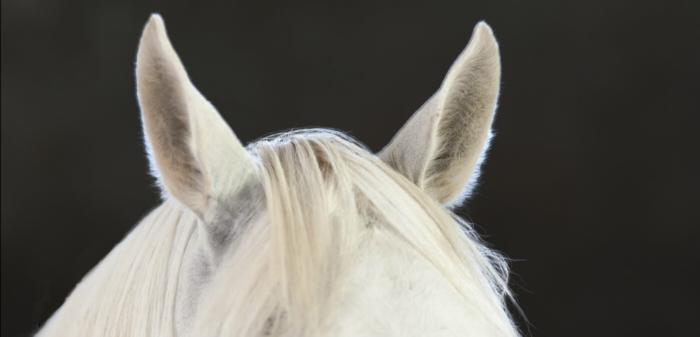 ¿Por qué no siempre me entiendo con mi caballo?